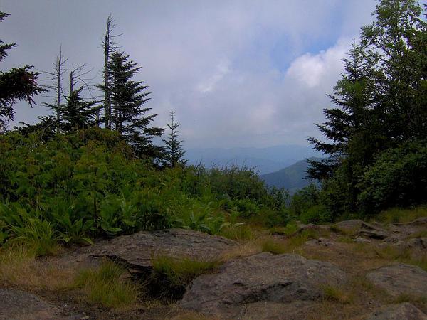Red Spruce (Picea Rubens) https://www.sagebud.com/red-spruce-picea-rubens
