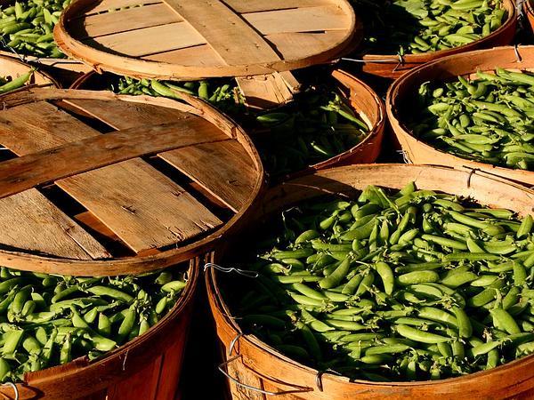 Garden Pea (Pisum Sativum) https://www.sagebud.com/garden-pea-pisum-sativum/