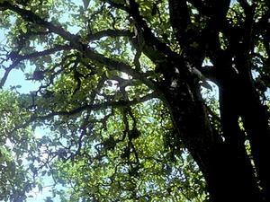 Catchbirdtree
