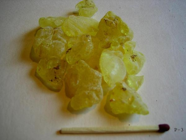 Pistache (Pistacia) https://www.sagebud.com/pistache-pistacia/