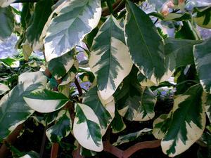 Umbrella Catchbirdtree