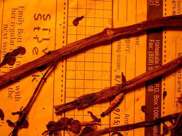 Little Hogweed (Portulaca Oleracea) https://www.sagebud.com/little-hogweed-portulaca-oleracea