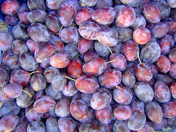 European Plum (Prunus Domestica) https://www.sagebud.com/european-plum-prunus-domestica