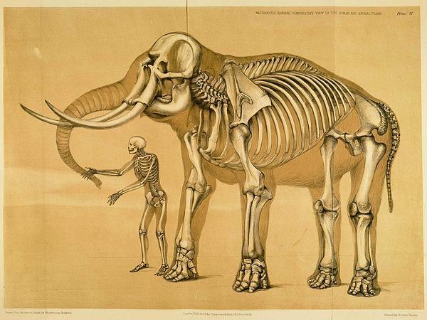 Unicorn-Plant (Proboscidea) https://www.sagebud.com/unicorn-plant-proboscidea