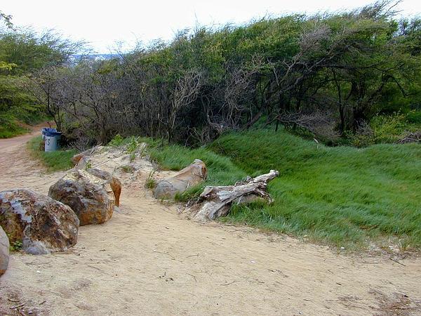Mesquite (Prosopis) https://www.sagebud.com/mesquite-prosopis
