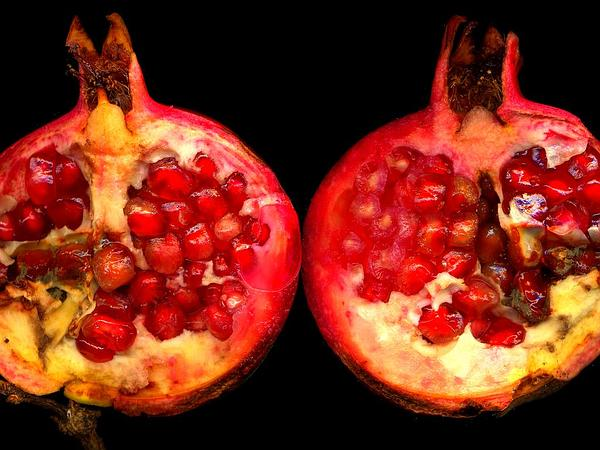Pomegranate (Punica) https://www.sagebud.com/pomegranate-punica/