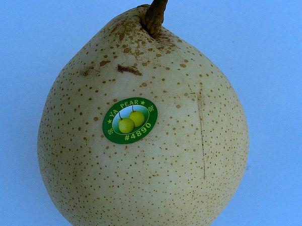 Chinese Pear (Pyrus Pyrifolia) https://www.sagebud.com/chinese-pear-pyrus-pyrifolia