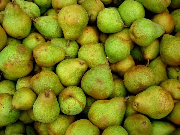Pear (Pyrus) https://www.sagebud.com/pear-pyrus/