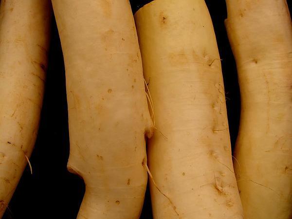 Cultivated Radish (Raphanus Sativus) https://www.sagebud.com/cultivated-radish-raphanus-sativus