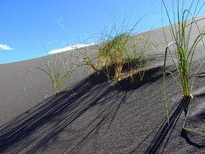 Blowout Grass