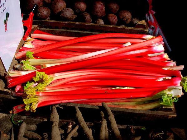 Rhubarb (Rheum) https://www.sagebud.com/rhubarb-rheum