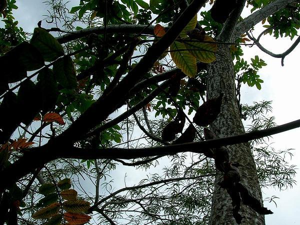 Neneleau (Rhus Sandwicensis) https://www.sagebud.com/neneleau-rhus-sandwicensis
