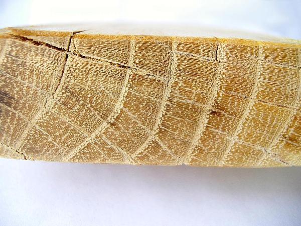 Locust (Robinia) https://www.sagebud.com/locust-robinia