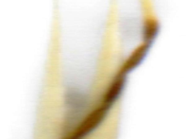 Wallaby Grass (Rytidosperma) https://www.sagebud.com/wallaby-grass-rytidosperma