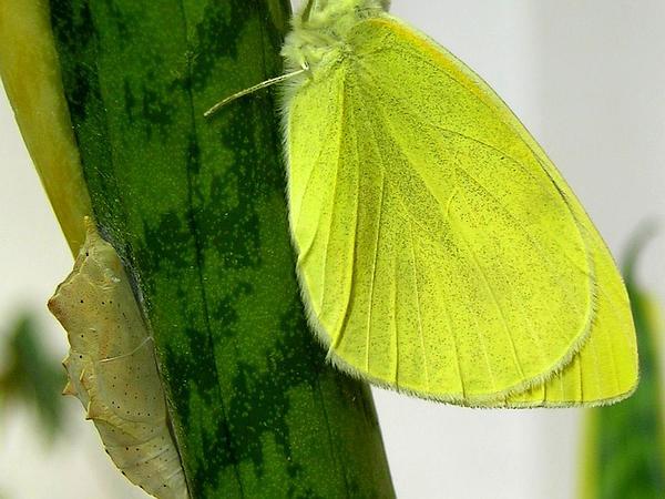 Viper's Bowstring Hemp (Sansevieria Trifasciata) https://www.sagebud.com/vipers-bowstring-hemp-sansevieria-trifasciata