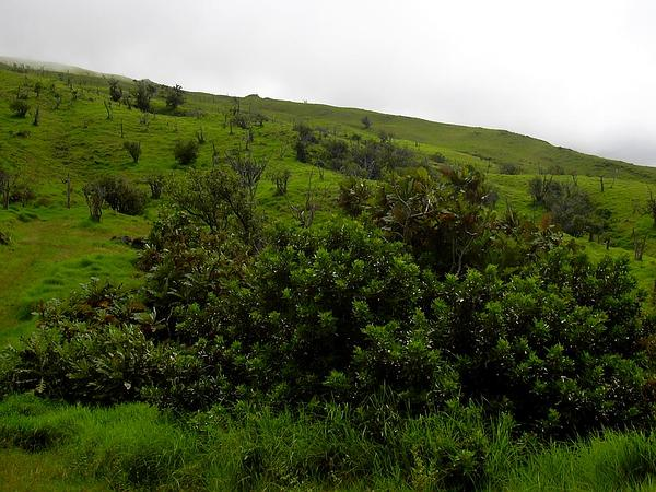 Brazilian Peppertree (Schinus Terebinthifolius) https://www.sagebud.com/brazilian-peppertree-schinus-terebinthifolius