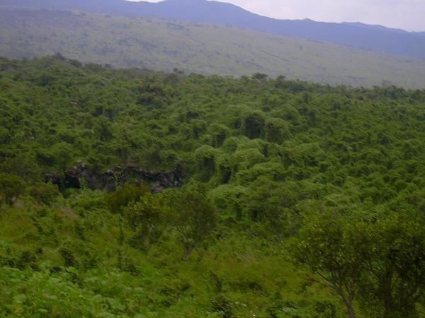 Paha (Sicyos Pachycarpus) https://www.sagebud.com/paha-sicyos-pachycarpus/