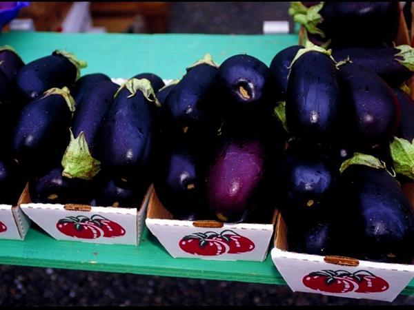 Eggplant (Solanum Melongena) https://www.sagebud.com/eggplant-solanum-melongena