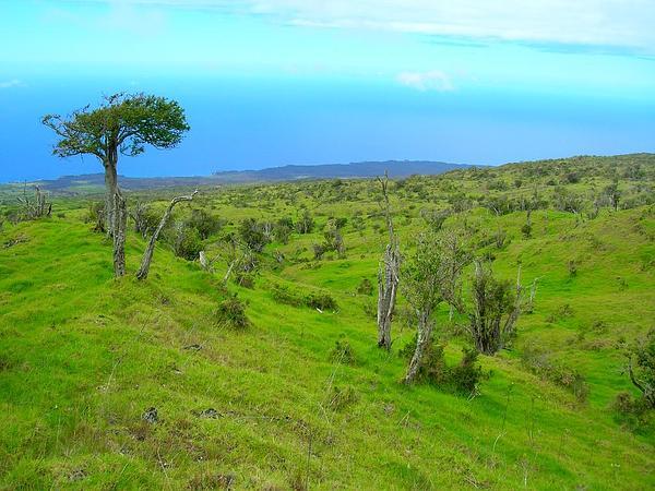 Hawai'I Roughbush (Streblus Pendulinus) https://www.sagebud.com/hawaii-roughbush-streblus-pendulinus
