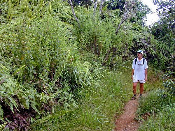 Herbaceous Glorytree (Tibouchina Herbacea) https://www.sagebud.com/herbaceous-glorytree-tibouchina-herbacea