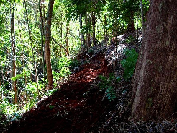 Australian Redcedar (Toona Ciliata) https://www.sagebud.com/australian-redcedar-toona-ciliata