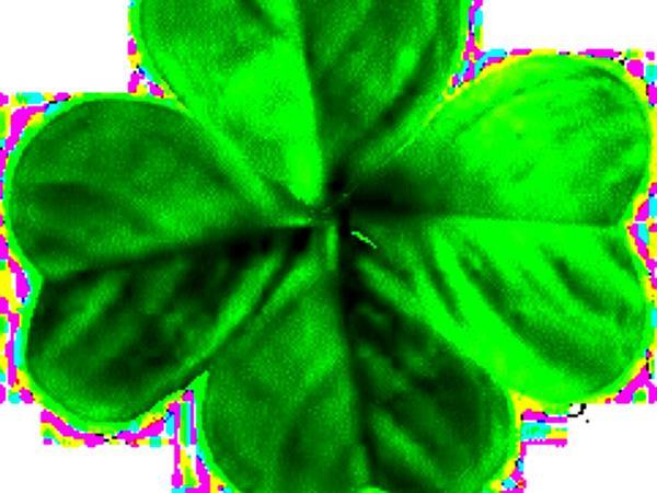Clover (Trifolium) https://www.sagebud.com/clover-trifolium
