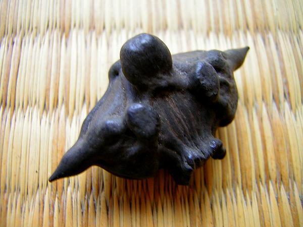 Water Chestnut (Trapa Natans) https://www.sagebud.com/water-chestnut-trapa-natans