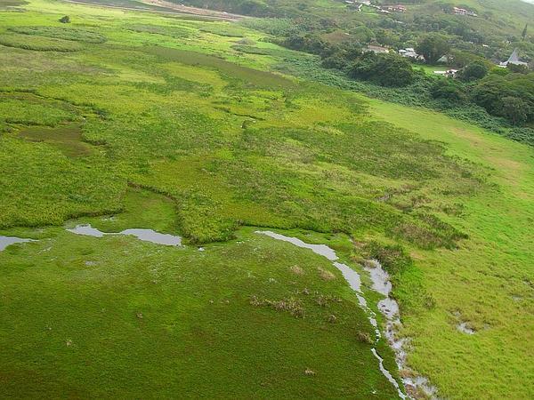 Para Grass (Urochloa Mutica) https://www.sagebud.com/para-grass-urochloa-mutica