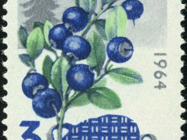 Whortleberry (Vaccinium Myrtillus) https://www.sagebud.com/whortleberry-vaccinium-myrtillus