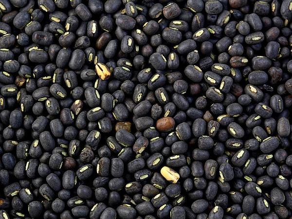 Black Gram (Vigna Mungo) https://www.sagebud.com/black-gram-vigna-mungo