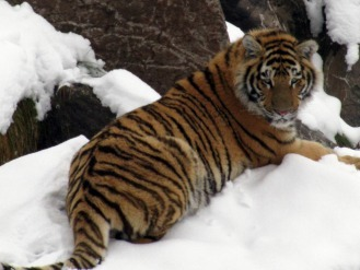 Forfait zoo auberge des berges saguenay lac st jean small