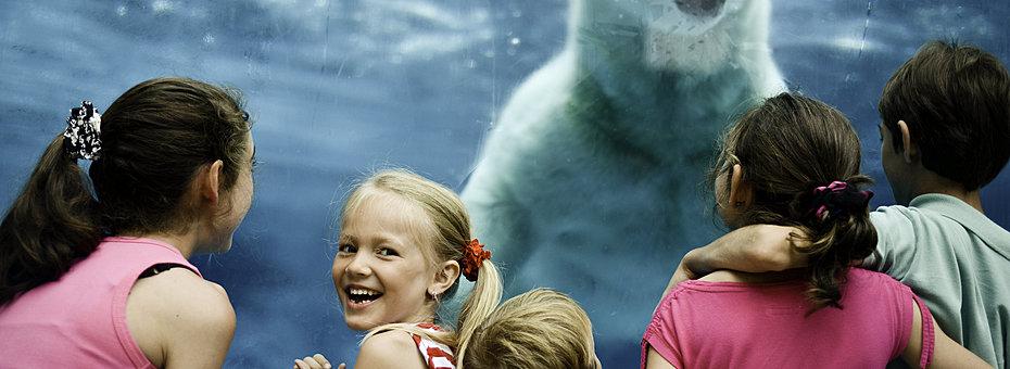 Rsz ours polaire enfants zoo st felicien banner