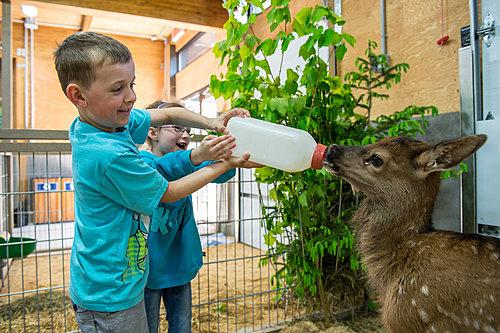Rsz zoo de saint felcien   faon bibron small