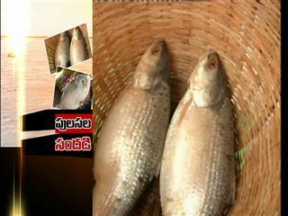 Video : గోదావరి జిల్లాలో పూలస చేప సందడి