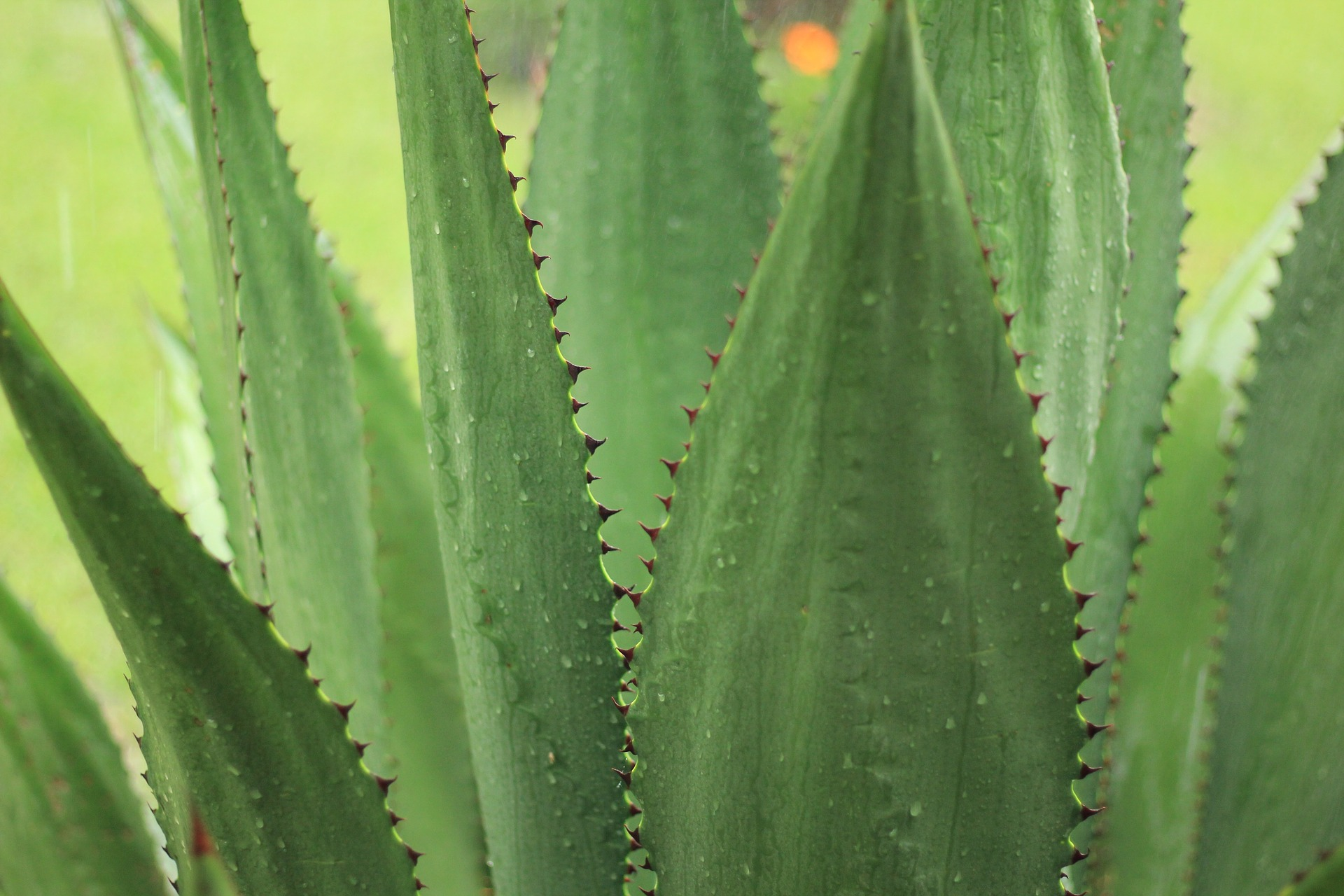 Aloe Is Your Best Friend This Summer