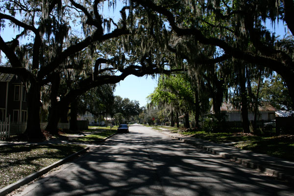 Tree Lined Avenue in Historic Sanford, FL