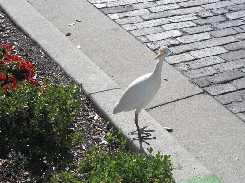 Bird on First Street 3