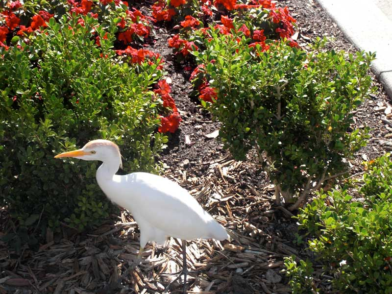 Bird on First Street 2