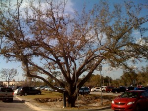 The freaky Wal Mart Tree