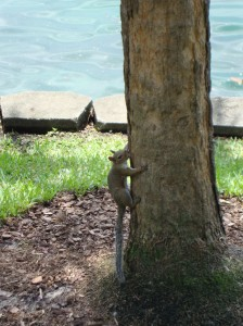 Squirrel by Lake Eola Orlando