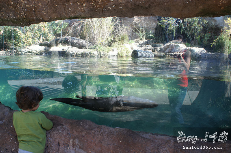 Day 140 – River Otters at the Zoo