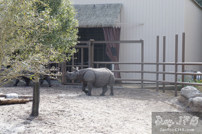 Rhinos at the Sanford Zoo