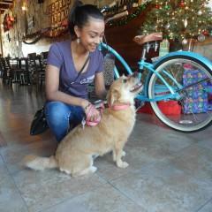 A Dog's Life in Sanford