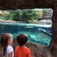 2016 Spring Break Guide: Things to Do with Kids in Sanford FL