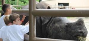zoo summer-2