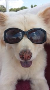 Sanford Selfie Pet Winner