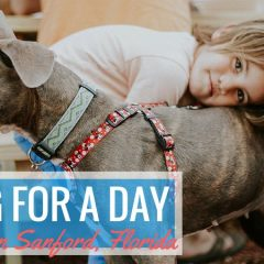 Dog for a Day in Sanford and Pictures of Pints n'Paws 2017