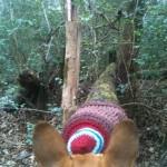 Knitting on a fallen log