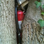 Photo of fire extinguisher in the crook of a tree.