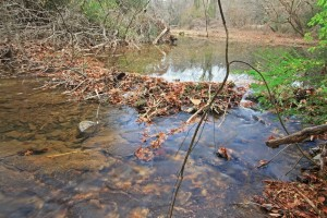 This beaver dam across Proctor Creek, at a site downstream of the bridge at James Jackson Parkway, exemplifies the type of habitat once common along the length of Proctor Creek. File/Credit: Alan Cressler via Flickr